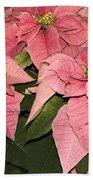 Pink Poinsettias Close-up Bath Towel