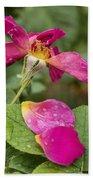 Pink Rose And Its Petals Bath Towel