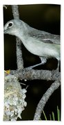 Plumbeous Vireo With Four Chicks In Nest Bath Towel