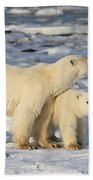 Polar Bear Mother And Cub Bath Towel