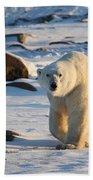 Polar Bear On The Tundra Bath Towel