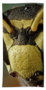 Polistes Dominula 41 Bath Towel