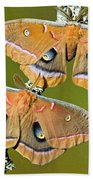 Polyphemus Moths Bath Towel