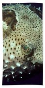 Porcupinefish Bath Towel