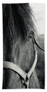 Portrait Of Horse In Black And White Bath Towel