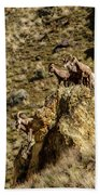 Posing Bighorn Sheep Bath Towel