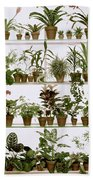Potted Plants On Shelves Bath Towel