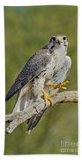 Prairie Falcon Bath Towel