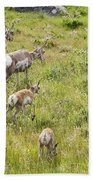 Pronghorn Antelope In Lamar Valley Bath Towel