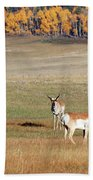 Pronghorn In The Park Hand Towel