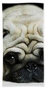 Pug Puppy  Bath Towel