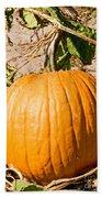 Pumpkin Growing In Pumpkin Field Bath Towel