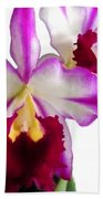 Purple And White Cattleyas Against White Space Bath Towel