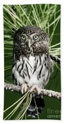 Pygmy Owl Bath Towel