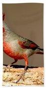 Pyrrhuloxia Cardinalis Sinuatus Male Bath Towel