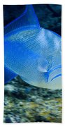 Queen Triggerfish Bath Towel