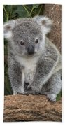 Queensland Koala Juvenile Australia Bath Towel