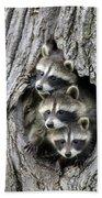 Raccoon Trio At Den Minnesota Hand Towel by Jurgen and Christine Sohns