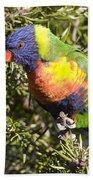 Rainbow Lorikeet Hand Towel