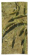 Rainbow Trout Art Prints Fish Fishing Fishermen Bath Towel