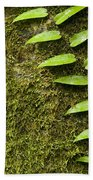 Rainforest Vine Climbing Sabah Borneo Bath Towel