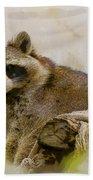 Rakish Raccoon  Bath Towel