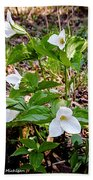 Rare Great White Trilliums Bath Towel