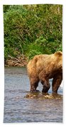 Ready To Pounce On A Salmon  In The Moraine River In Katmai National Preserve-ak Bath Towel