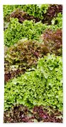 Red And Green Leaf Lettuce  Bath Towel