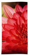 Red Beauty Welcomes The Sun - Flowers Of Summer Bath Towel