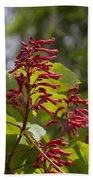 Red Buckeye - Aesculus Pavia - Wildflowers Bath Towel
