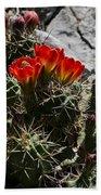 Red Cactus Flower  Bath Towel