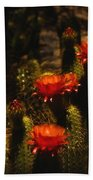 Red Cactus Flowers  Bath Towel