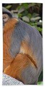 Red Colobus Monkey Bath Towel