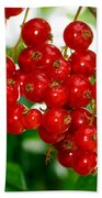 Red Currants Ribes Rubrum Bath Towel