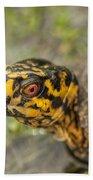 Red Eyed Alabama Box Turtle - Terrapene Carolina Bath Towel