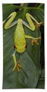 Red-eyed Tree Frog Costa Rica Bath Towel
