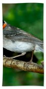 Red-faced Warbler With Caterpillar Bath Towel