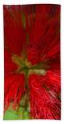 Red Fairy Duster Calliandra Californica Bath Towel