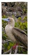 Red-footed Booby Galapagos Islands Bath Towel