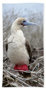 Red-footed Booby Bath Towel