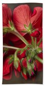 Red Geranium In Progress Bath Towel