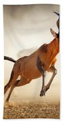 Red Hartebeest Running In Dust Bath Towel