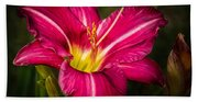 Red Magic Daylily Hand Towel
