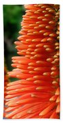 Red-orange Flower Of Eremurus Ruiter-hybride Bath Towel