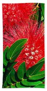 Red Powder Puff Bath Sheet