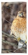 Red-shouldered Hawk Front View Square Bath Towel