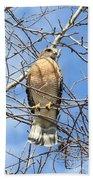Red Shouldered Hawk In Tree Bath Towel