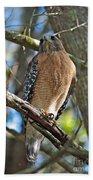 Red-shouldered Hawk On Branch Bath Towel