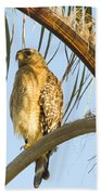 Red-shouldered Hawk On The Palm Tree Bath Towel